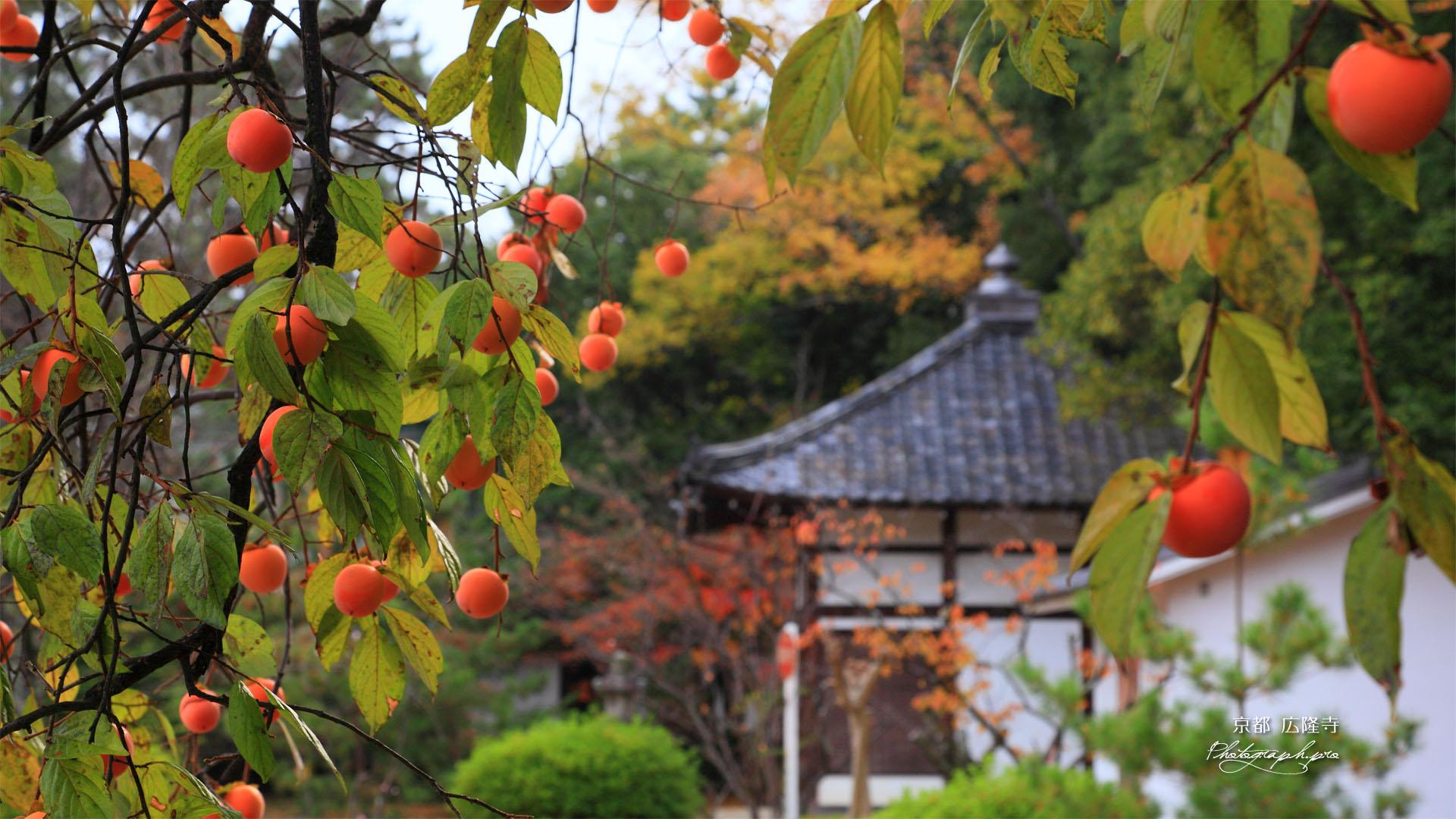 柿と広隆寺地蔵堂
