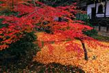 広隆寺上宮王院裏庭の紅葉