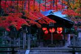京都吉田神社 竹中稲荷社の紅葉