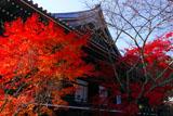京都光明寺 紅葉の御影堂