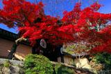 京都光明寺 勅使門前の紅葉