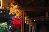 京都光明寺 回廊の吊灯籠と紅葉