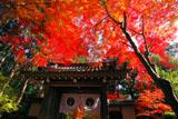 京都光明寺 紅葉の薬医門