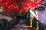 京都勝持寺 紅葉の参道