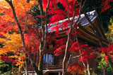 京都勝持寺 紅葉の不動堂