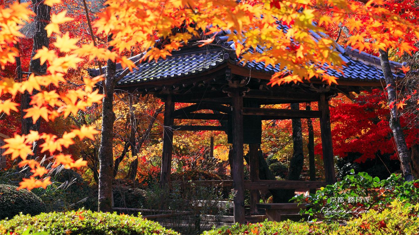 京都勝持寺 紅葉の鐘楼 壁紙