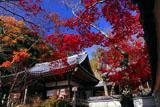 京都勝持寺 紅葉の本堂