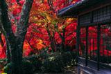 京都勝持寺 紅葉の高遠閣
