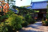京都正法寺 センリョウと本堂