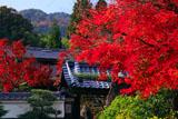 京都正法寺 紅葉の山門