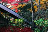 楊谷寺回廊と紅葉
