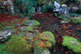 楊谷寺浄土苑の散り紅葉