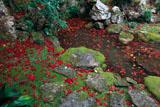 浄土苑の散紅葉