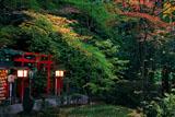 京都野宮神社 紅葉の白福稲荷社