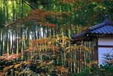 滝口寺 紅葉と竹林