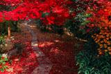京都直指庵の待合への小径