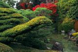 城南宮室町の庭の紅葉