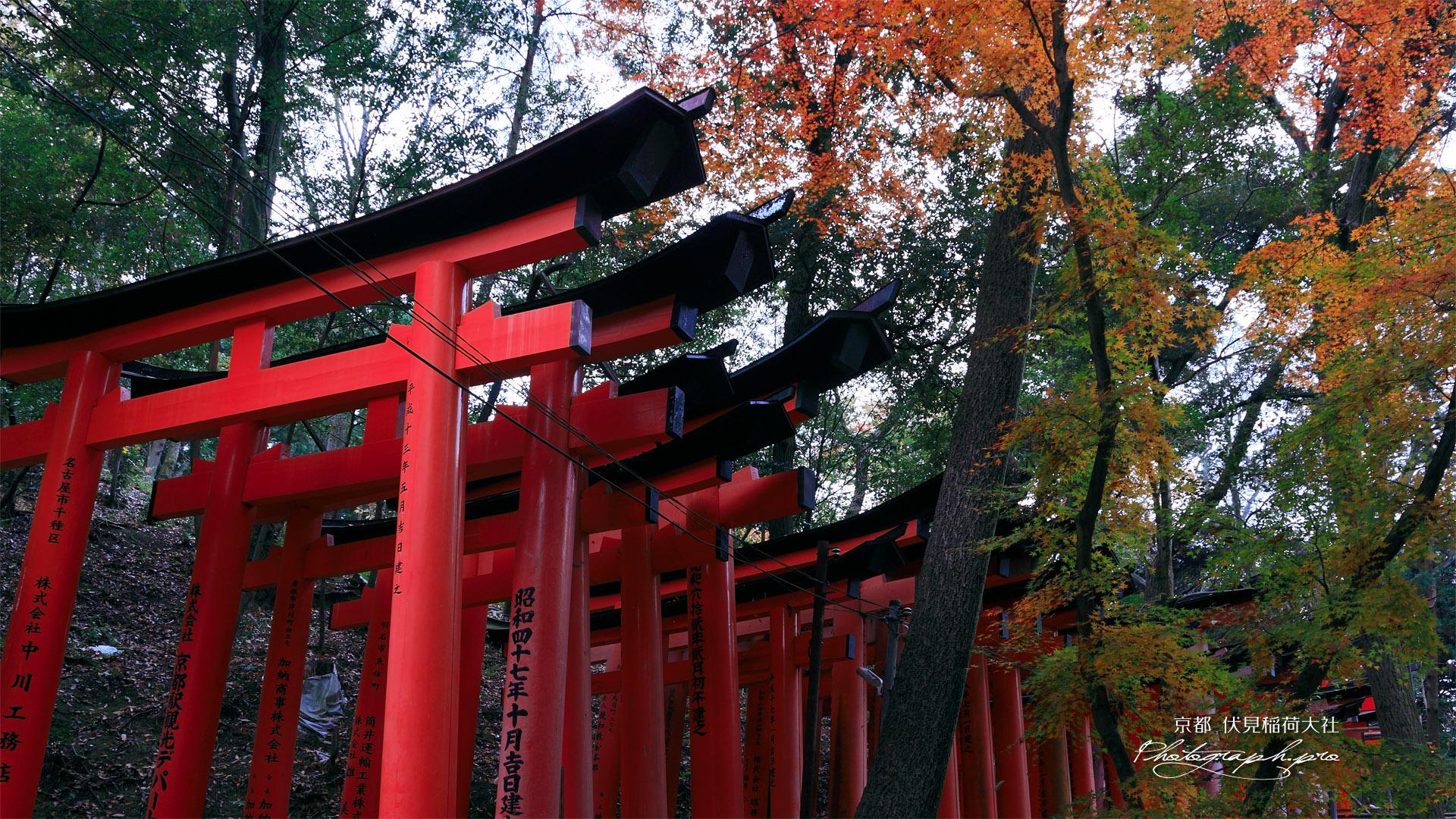 伏見稲荷大社 お山の鳥居と紅葉 の壁紙 19x1080