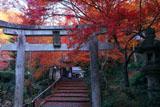 山科聖天 鳥居と紅葉