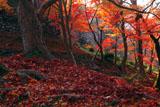 京都毘沙門堂 紅葉と参道の石垣