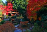 京都毘沙門堂 晩翠園の紅葉