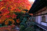 毘沙門堂 紅葉の晩翠園と宸殿