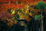 岩船寺山門の紅葉