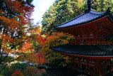 岩船寺本堂前からの三重塔