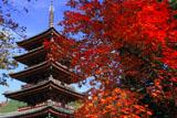紅葉と海住山寺五重塔