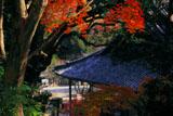 紅葉と海住山寺本堂