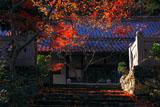 正法寺(和束) 紅葉と書院