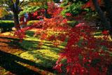 平等院 紅葉と表門