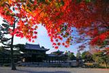平等院 紅葉と鳳凰堂