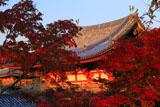 平等院 紅葉と鳳凰堂中堂の鳳凰像