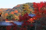 宇治浄土院からの紅葉と平等院鳳凰堂