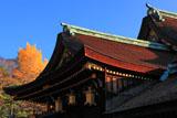 北野天満宮の社殿と銀杏