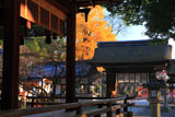 平野神社 拝殿越しに銀杏の黄葉