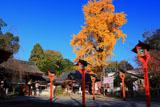 平野神社 燈籠とイチョウの黄葉