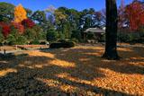 二条城清流園の散り黄葉