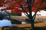 二条城内濠の紅葉
