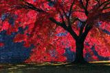 二条城 紅葉と石垣