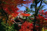 北野天満宮の紅葉越しの社殿