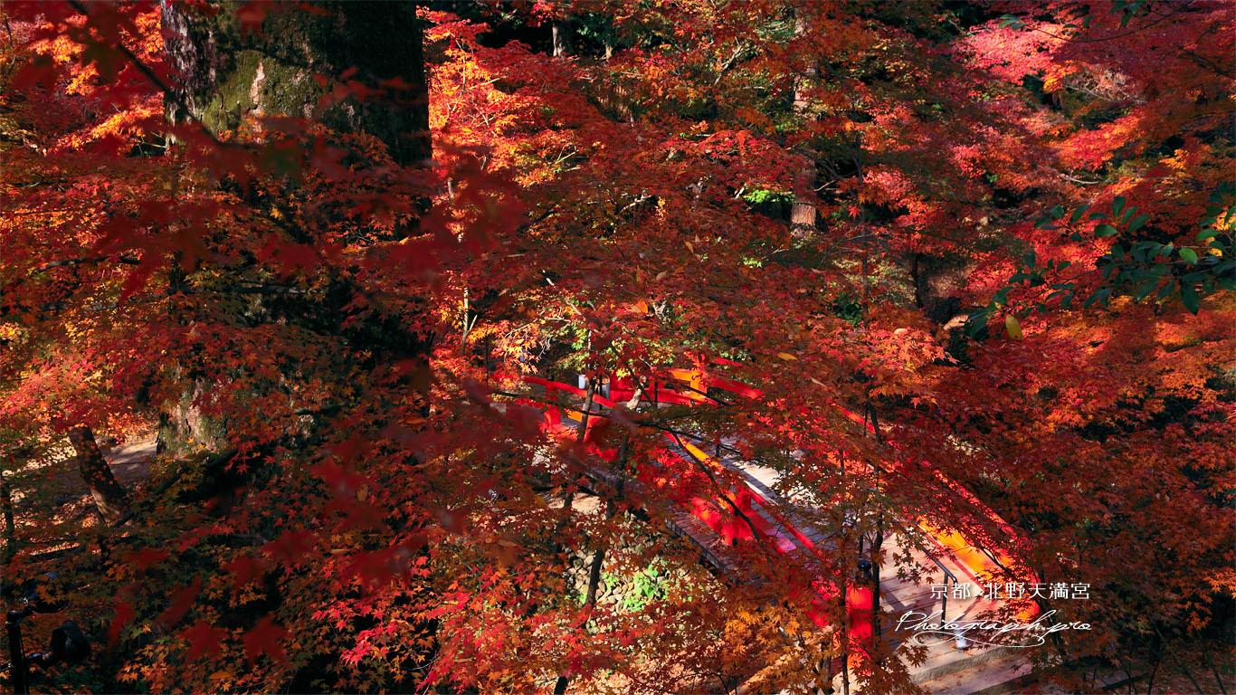 北野天満宮 紅葉越しの鶯橋 壁紙