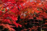 北野天満宮 紅葉の舞台を見上げて