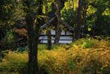 松尾大社 山吹の黄葉と神輿庫