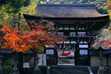 松尾大社 紅葉と楼門