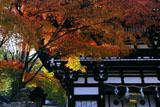 松尾大社 紅葉越しの楼門
