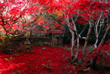京都厭離庵 庭園の散り紅葉