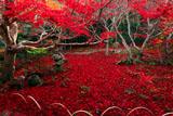 京都厭離庵 庭園のレッドカーペット