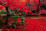 京都厭離庵 織部灯籠と敷紅葉